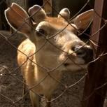 Zoo Bugu-Ene_Karakol